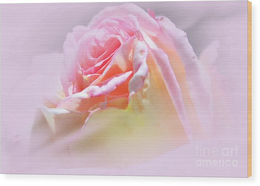 Peaceful Pink Rose Haze Wood Print