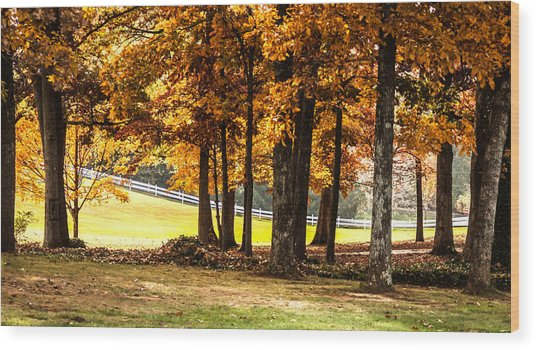 Streaming Sunrays Wood Print by Linda A Waterhouse