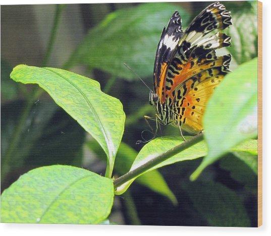 Tiger Wings Wood Print