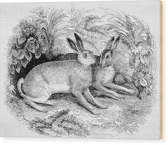 Two Hares Wood Print