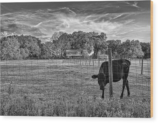 0570-223-bandw Wood Print