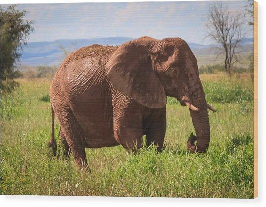African Desert Elephant Wood Print