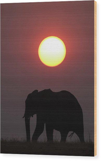 African Elephant At Sunset Wood Print