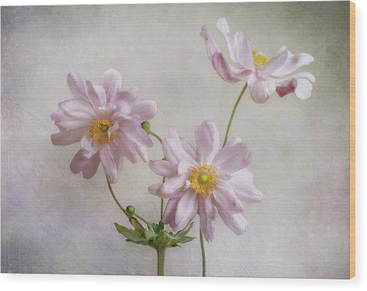 Anemones Wood Print by Mandy Disher