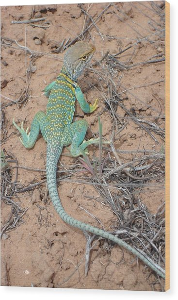 Another Collared Lizard Wood Print