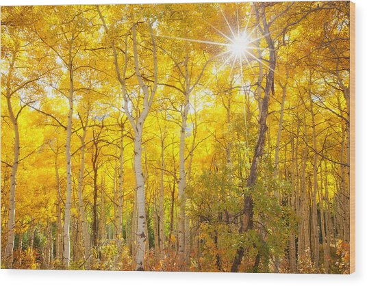 Aspen Morning Wood Print