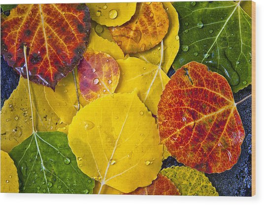 Aspen Rainbow Wood Print