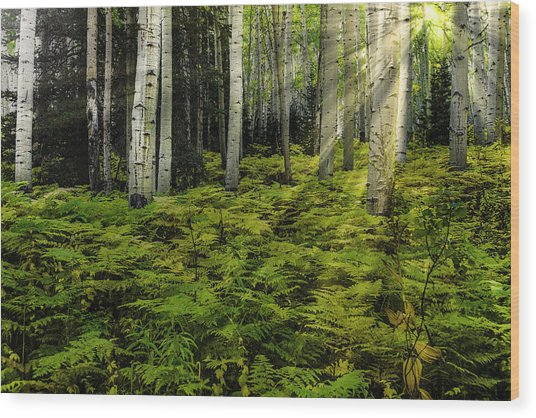 Aspen Sunrise Wood Print