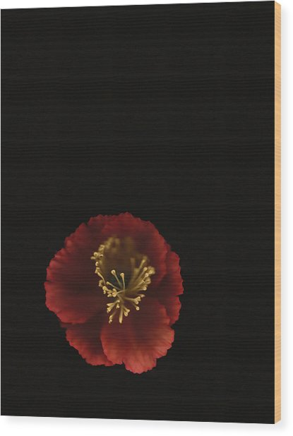 Autographic Poppy - Color Wood Print