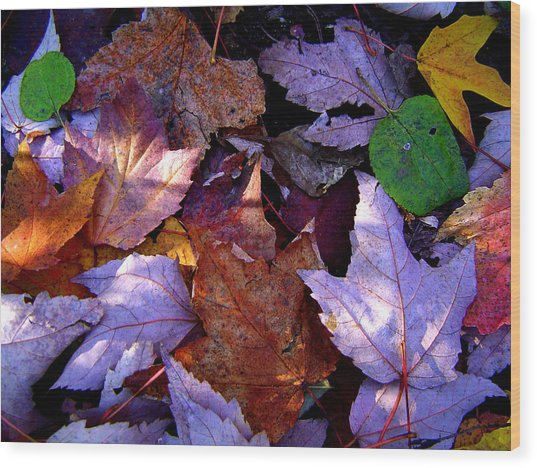 Autumn Groundcover Wood Print