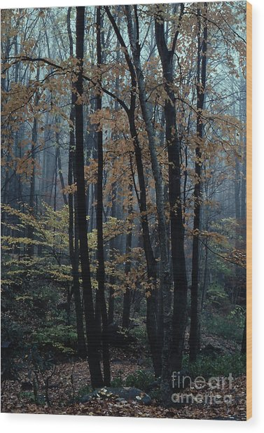 Autumn In The Forest Wood Print by Adeline Byford