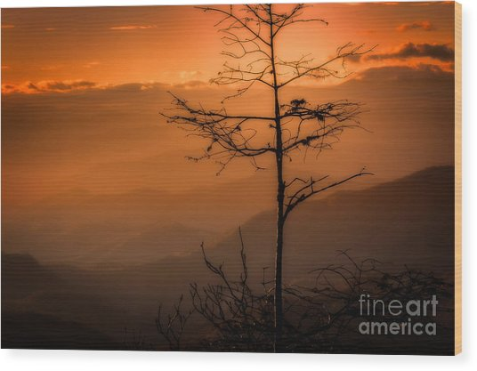 Autumn Stillness Wood Print