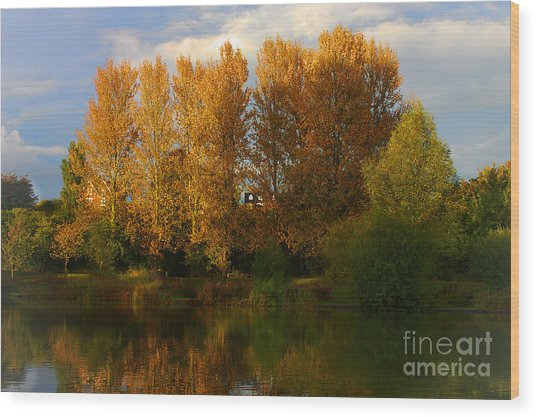 Wood Print featuring the photograph Autumn Trees by Jeremy Hayden