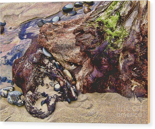 Beach Stump And Stones Wood Print by Joseph Vittek