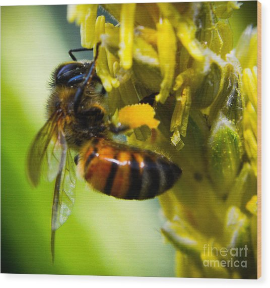 bee Wood Print by Kenroy Rhoden