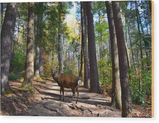 Big Buck Wood Print by Bob Jackson