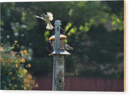 Birds03 Wood Print