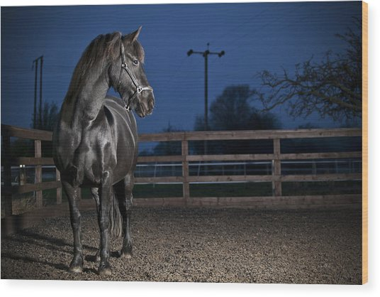 Black Fiesian Horse Wood Print