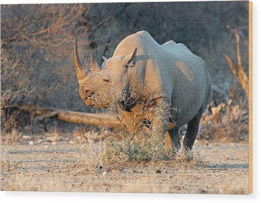 Black Rhinoceros Wood Print by Tony Camacho