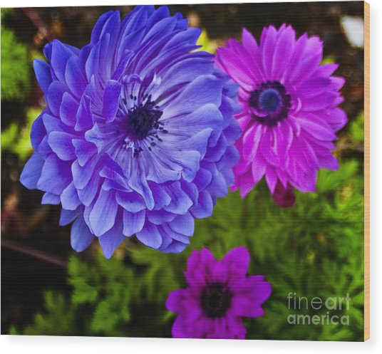Blue Flower Wood Print by Michael Fisher