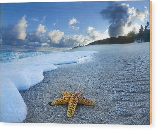 Blue Foam Starfish Wood Print