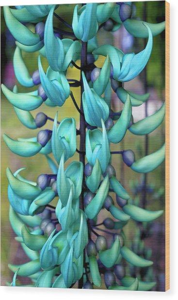 Blue Jade Plant  Hawaii, United States Wood Print