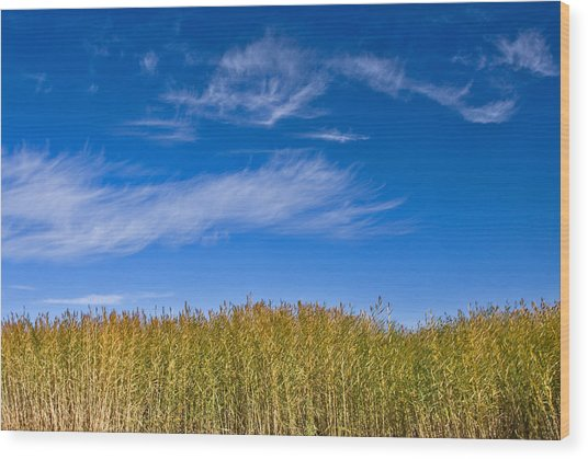 Blue Sky Wood Print by Jason KS Leung