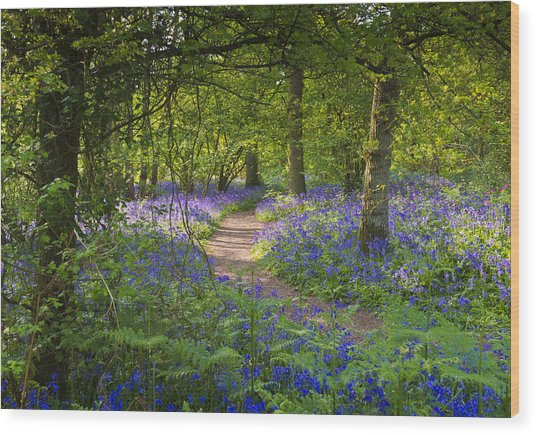 Bluebell Woods Walk Wood Print