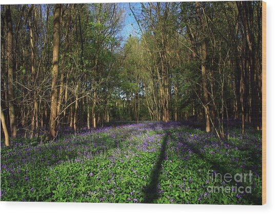 Wood Print featuring the photograph Bluebells by Jeremy Hayden