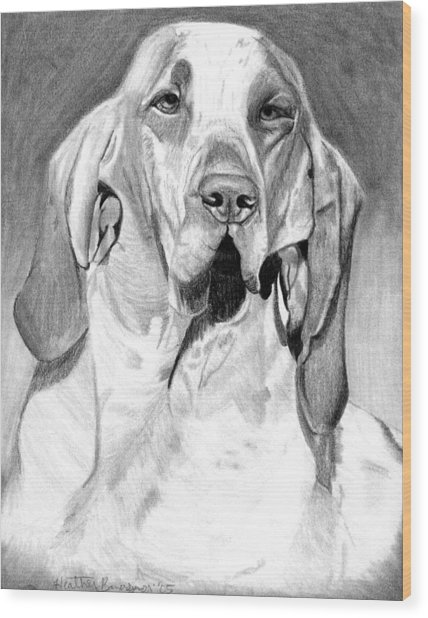 Bracco Italiano Dog Portrait Wood Print by Olde Time  Mercantile