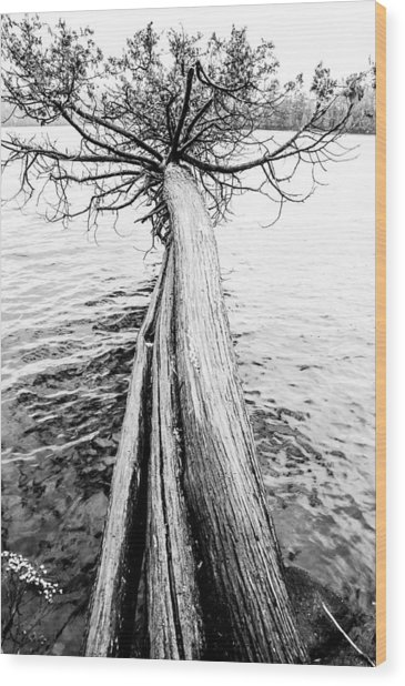 Wood Print featuring the photograph Branching Out by Rosemary Legge