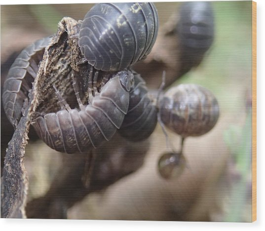 Bug Life Wood Print