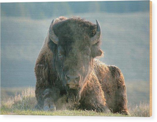 Bull Bison Wood Print