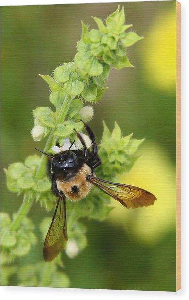 Bumbling On The Basil Wood Print