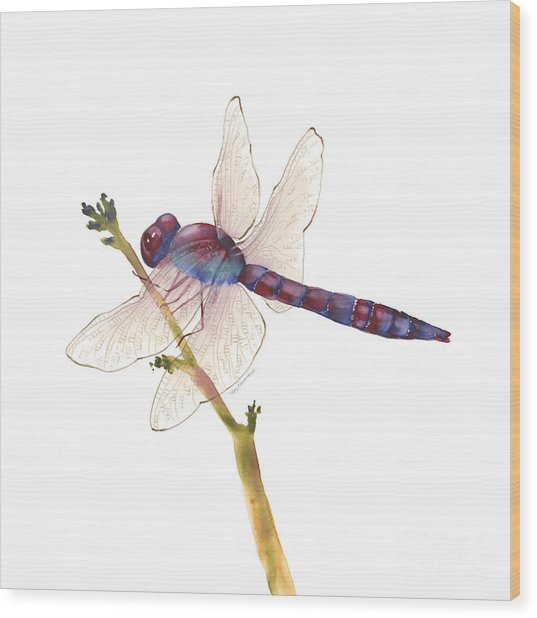Burgundy Dragonfly  Wood Print