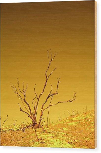 Burnt Bush Wood Print
