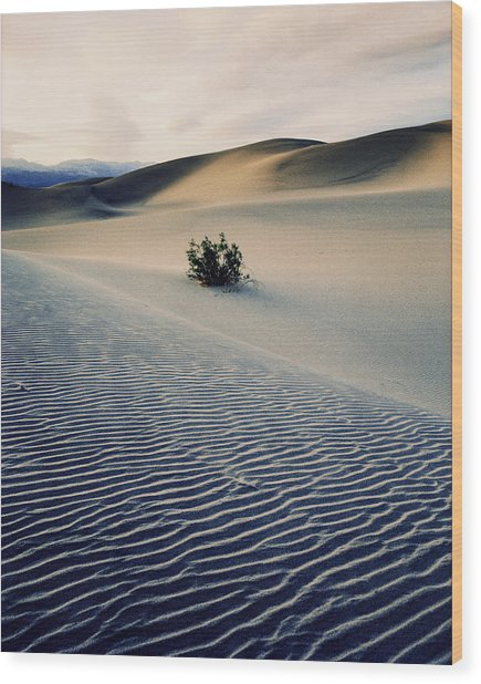 Bushes In Sand Dunes At Dusk Wood Print by Gary Yeowell