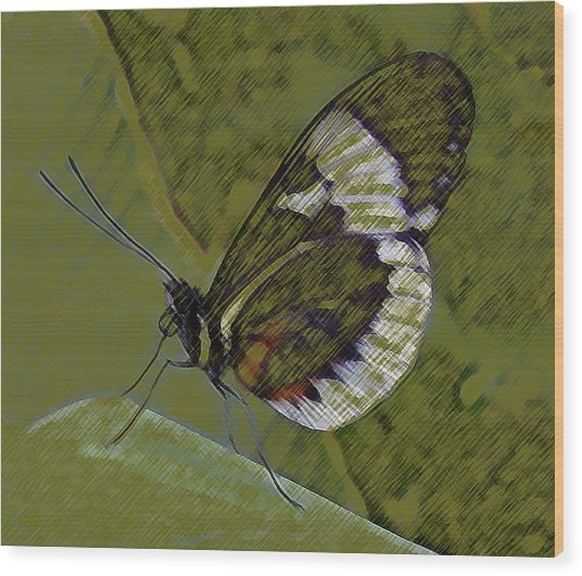 Butterfly Green Wood Print