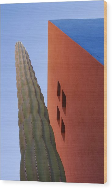 Cactus Against Colorful Walls Wood Print by Pixelchrome Inc