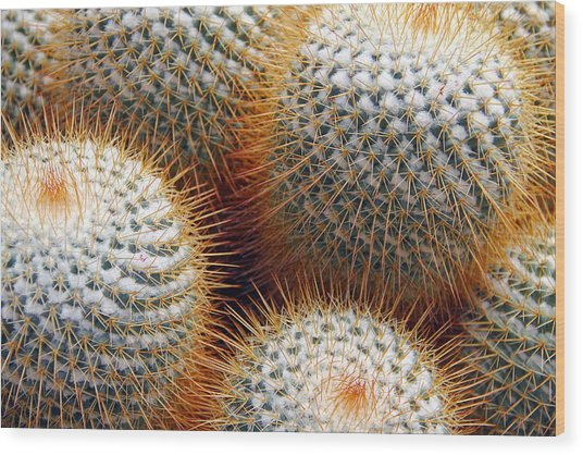 Cactus Wood Print by Jim McCullaugh