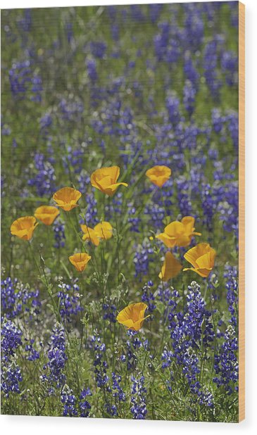 Wood Print featuring the photograph California Poppies And Lupine by Sherri Meyer