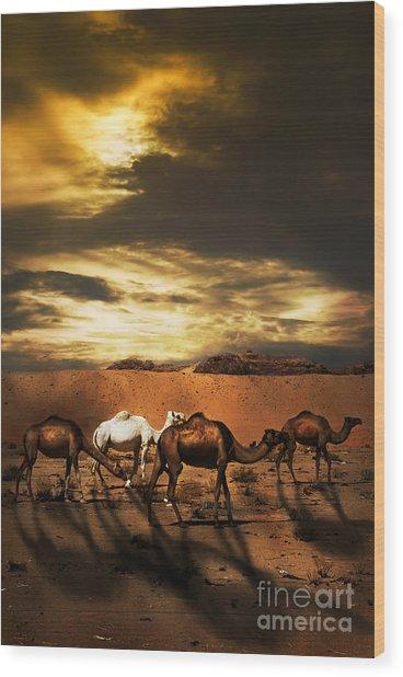 Camels Wood Print