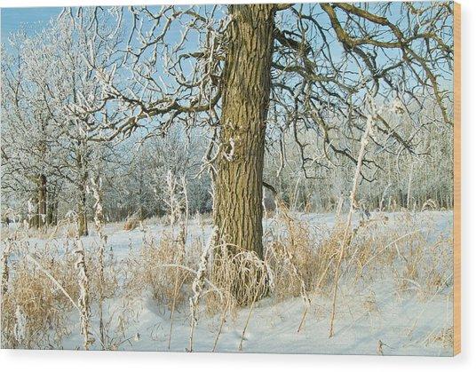 Canada, Manitoba, Winnipeg Wood Print