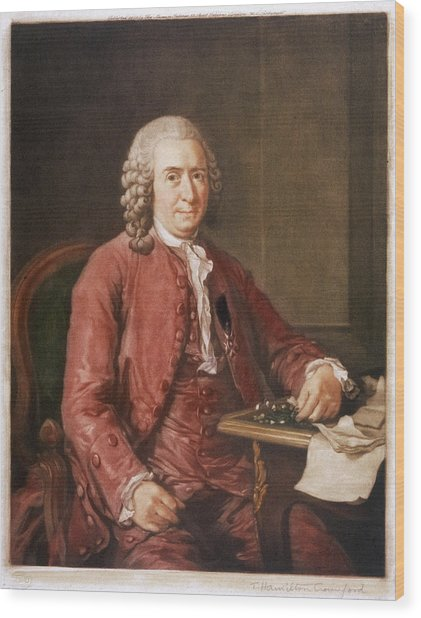 Carl Von Linne Known As Linnaeus Wood Print by Mary Evans Picture Library