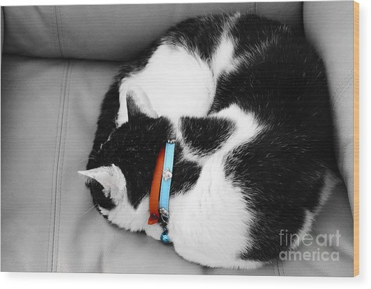 cat Wood Print by Bobby Mandal