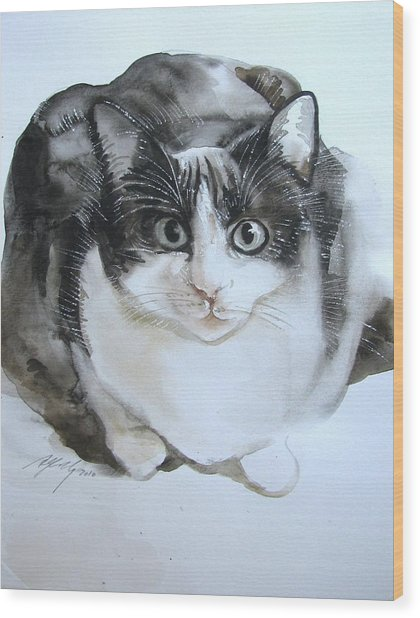 Cat In Black And White  Wood Print by Alfred Ng