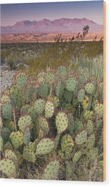 Chisos Mountains In Distance Seen From Wood Print by Witold Skrypczak