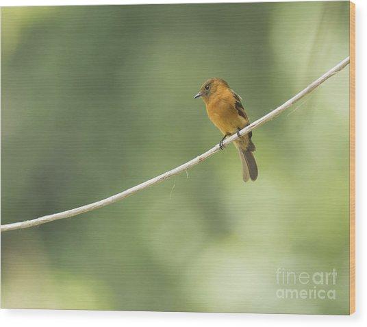Cinnamon Flycatcher Wood Print