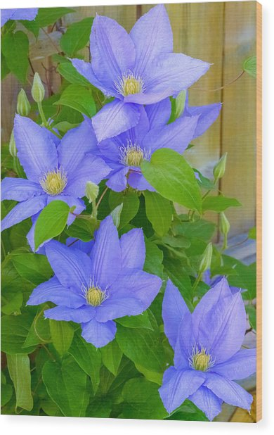 Wood Print featuring the photograph Clematis  by Garvin Hunter