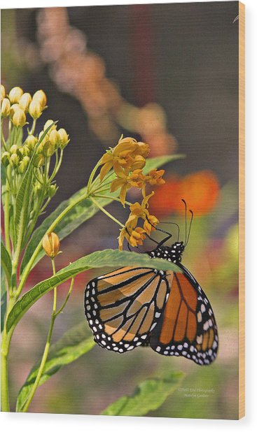 Clinging Butterfly Wood Print